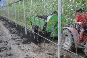 Distribuzione di torba per le colture di mele