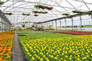 Utilizzo del nostro terriccio per florivivaismo.
